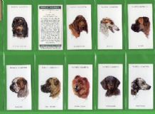Tobacco cigarette cards Dogs Heads by artist Peter Siegel